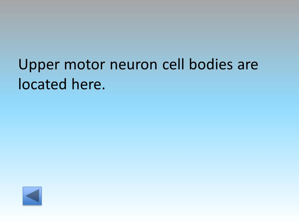 Upper motor neuron cell bodies are located here.