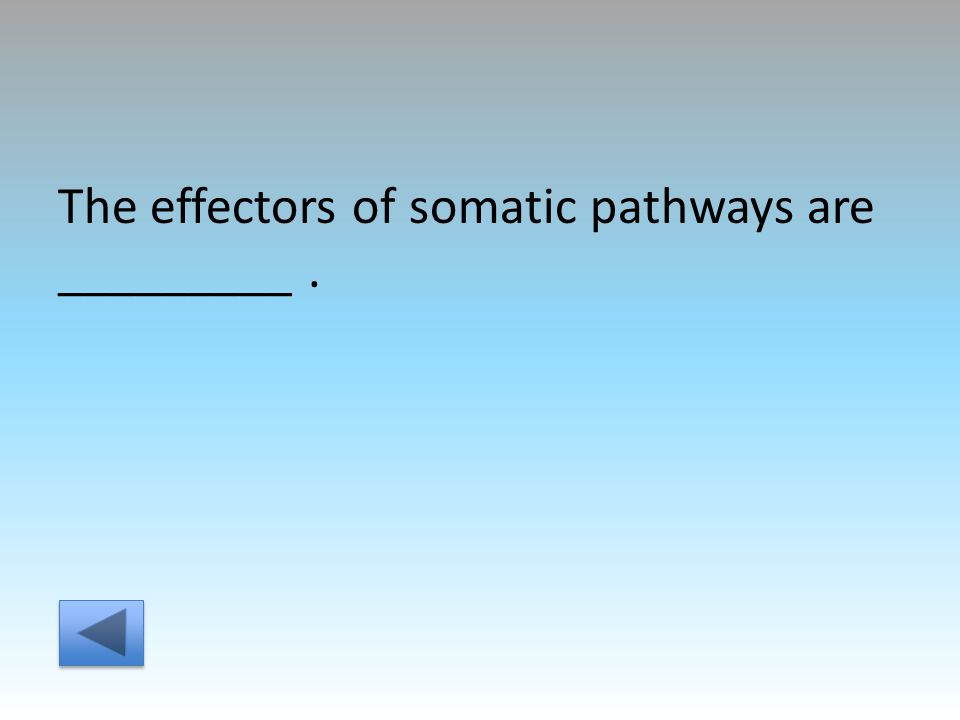 The effectors of somatic pathways are _________.