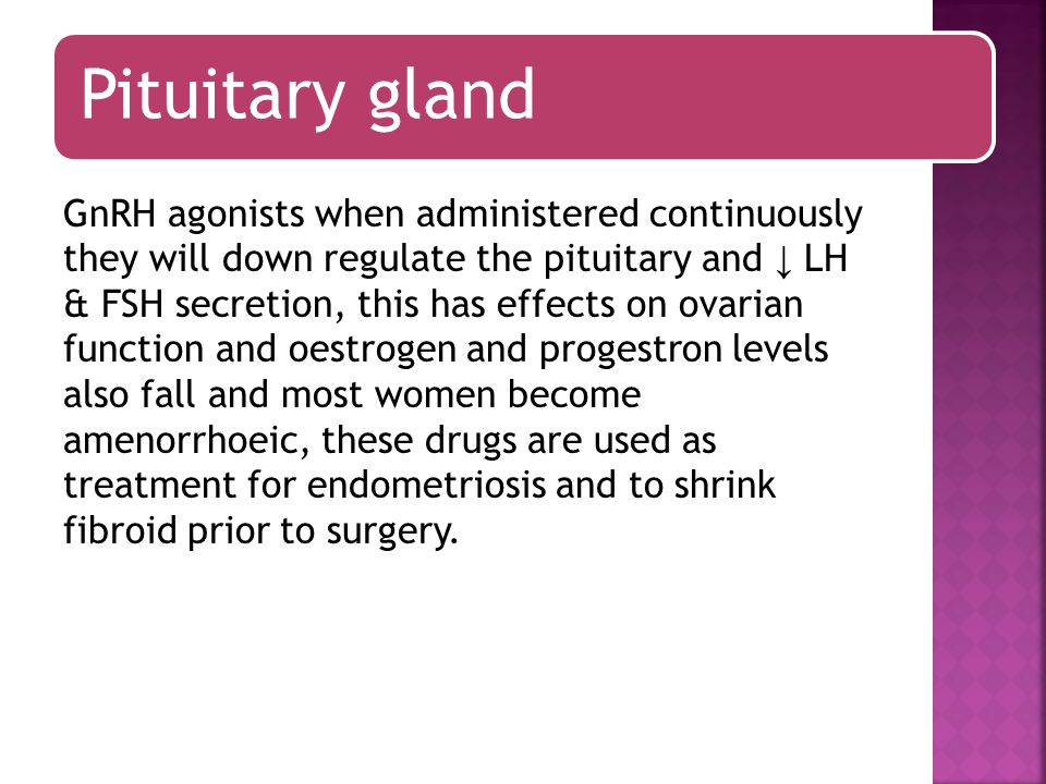 Pituitary gland As the dominant follicle grows further oestrogen level ↑ until it is sufficient to exert a positive feed back effect on the pituitary LH secretion which is ↑ more rapidly from day 12 onward called the LH surge.