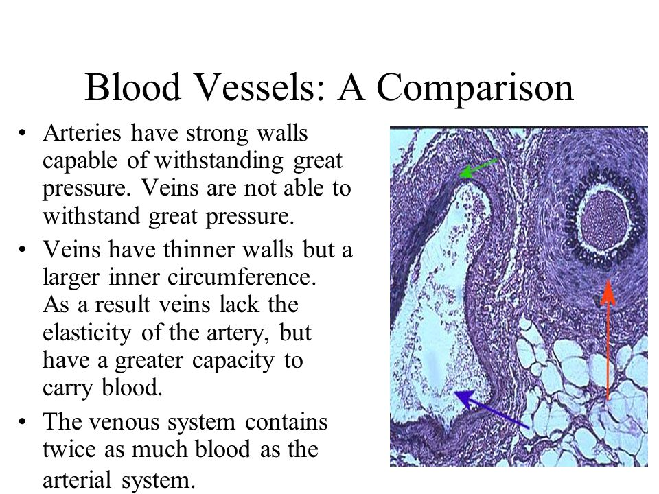 Blood Vessels: A Comparison Arteries have strong walls capable of withstanding great pressure. Veins are not able to withstand great pressure. Veins h