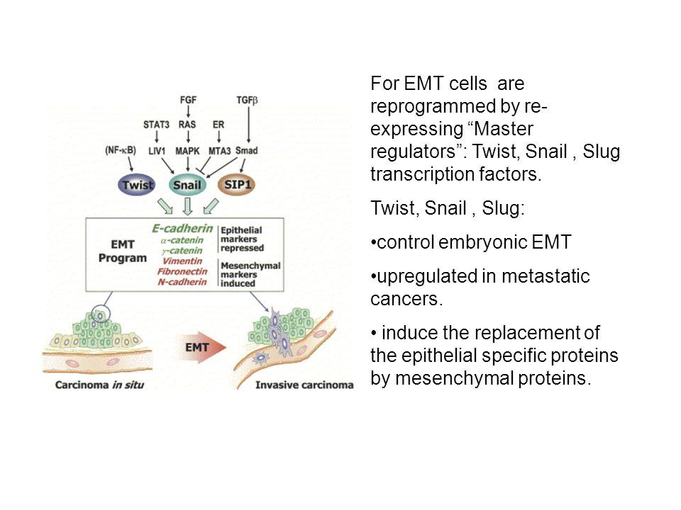 For EMT cells are reprogrammed by re- expressing Master regulators : Twist, Snail, Slug transcription factors.