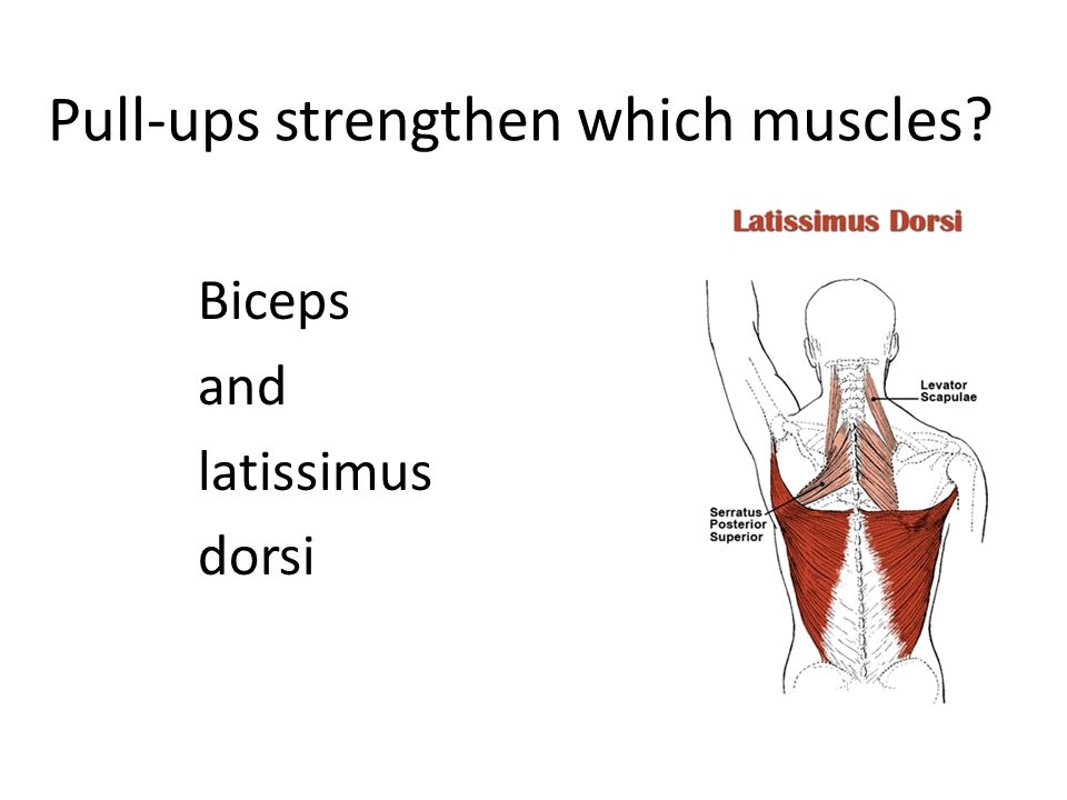 Pull-ups strengthen which muscles Biceps and latissimus dorsi