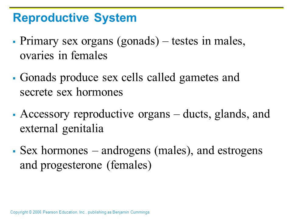 Copyright © 2006 Pearson Education, Inc., publishing as Benjamin Cummings Reproductive System  Primary sex organs (gonads) – testes in males, ovaries in females  Gonads produce sex cells called gametes and secrete sex hormones  Accessory reproductive organs – ducts, glands, and external genitalia  Sex hormones – androgens (males), and estrogens and progesterone (females)