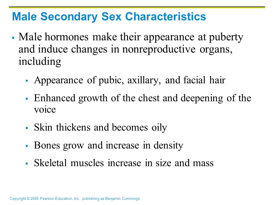Copyright © 2006 Pearson Education, Inc., publishing as Benjamin Cummings Male Secondary Sex Characteristics  Male hormones make their appearance at puberty and induce changes in nonreproductive organs, including  Appearance of pubic, axillary, and facial hair  Enhanced growth of the chest and deepening of the voice  Skin thickens and becomes oily  Bones grow and increase in density  Skeletal muscles increase in size and mass