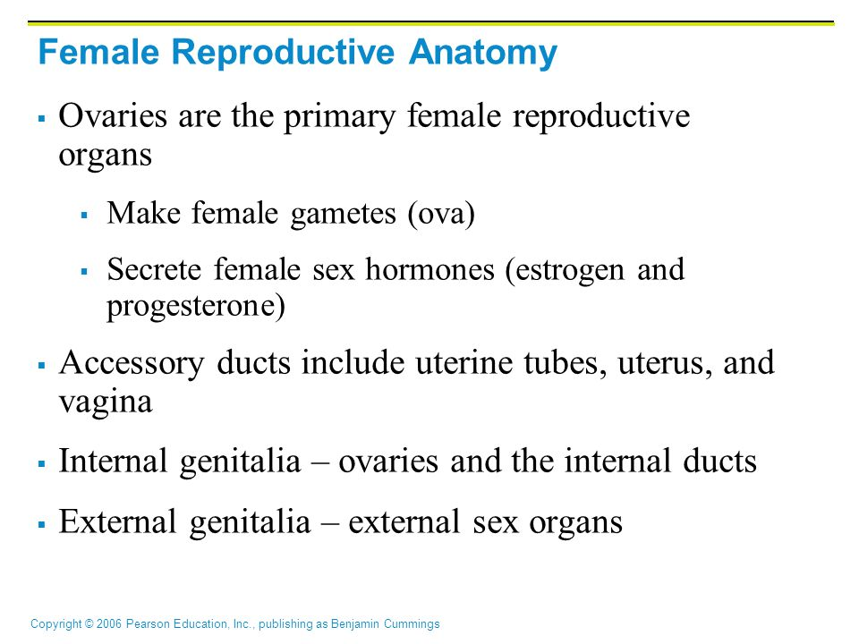 Copyright © 2006 Pearson Education, Inc., publishing as Benjamin Cummings Female Reproductive Anatomy  Ovaries are the primary female reproductive organs  Make female gametes (ova)  Secrete female sex hormones (estrogen and progesterone)  Accessory ducts include uterine tubes, uterus, and vagina  Internal genitalia – ovaries and the internal ducts  External genitalia – external sex organs