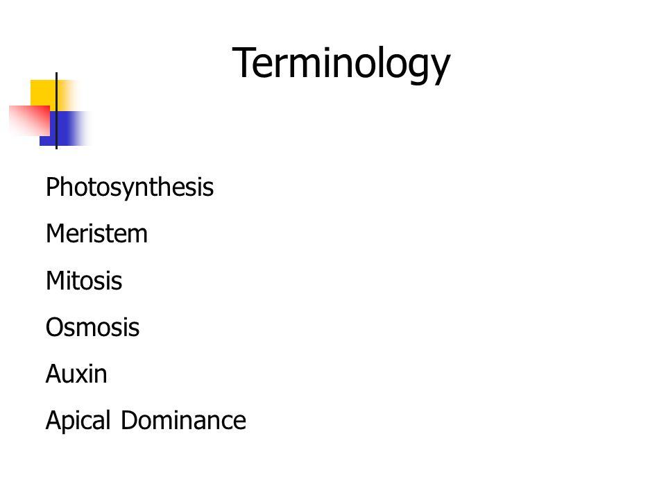 Terminology Photosynthesis Meristem Mitosis Osmosis Auxin Apical Dominance