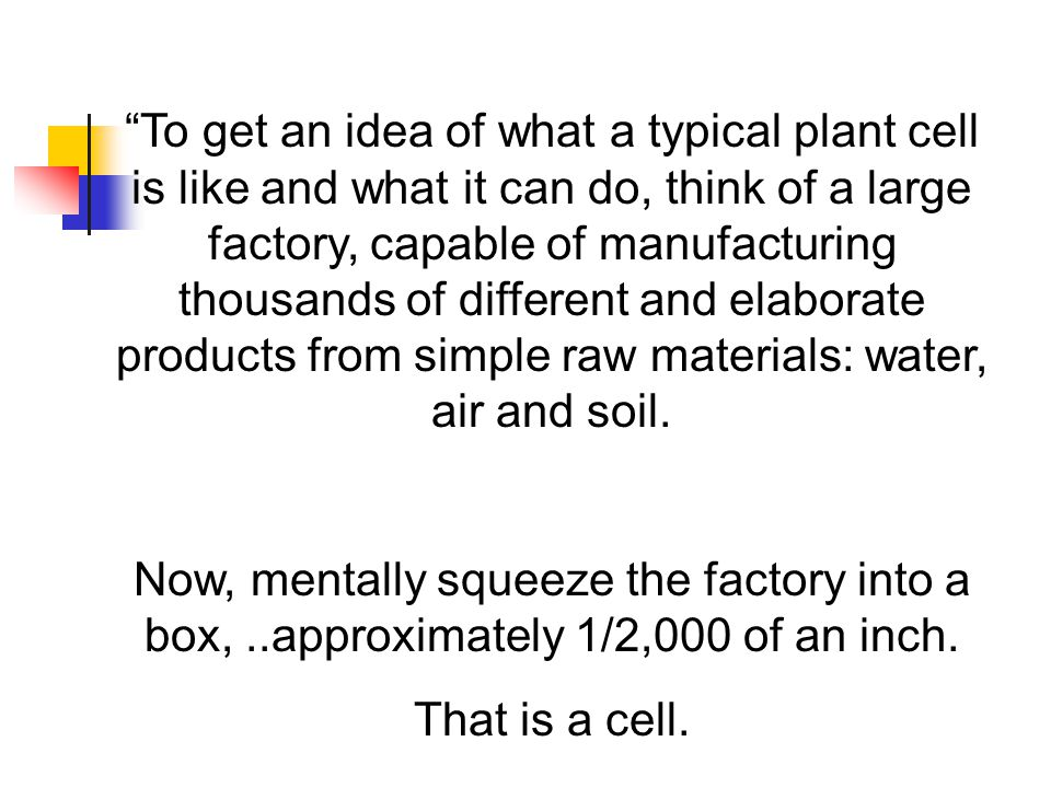 To get an idea of what a typical plant cell is like and what it can do, think of a large factory, capable of manufacturing thousands of different and elaborate products from simple raw materials: water, air and soil.
