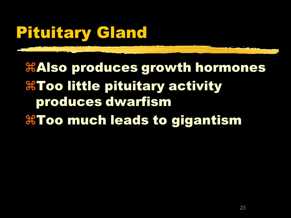 23 Pituitary Gland zAlso produces growth hormones zToo little pituitary activity produces dwarfism zToo much leads to gigantism