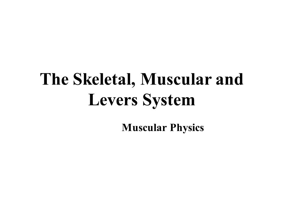 The Skeletal, Muscular and Levers System Muscular Physics