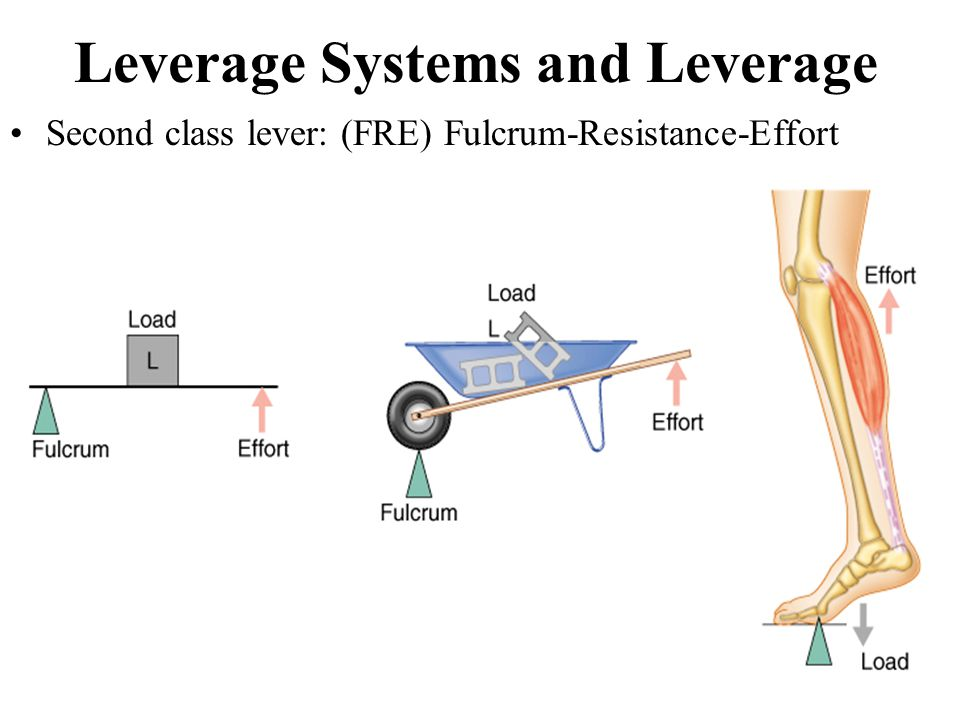 Leverage Systems and Leverage Second class lever: (FRE) Fulcrum-Resistance-Effort