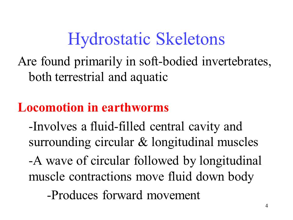 4 Hydrostatic Skeletons Are found primarily in soft-bodied invertebrates, both terrestrial and aquatic Locomotion in earthworms -Involves a fluid-fill