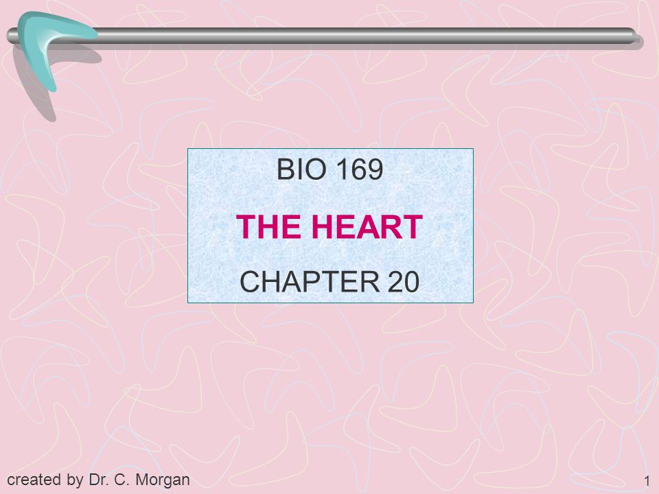 1 BIO 169 THE HEART CHAPTER 20 created by Dr. C. Morgan
