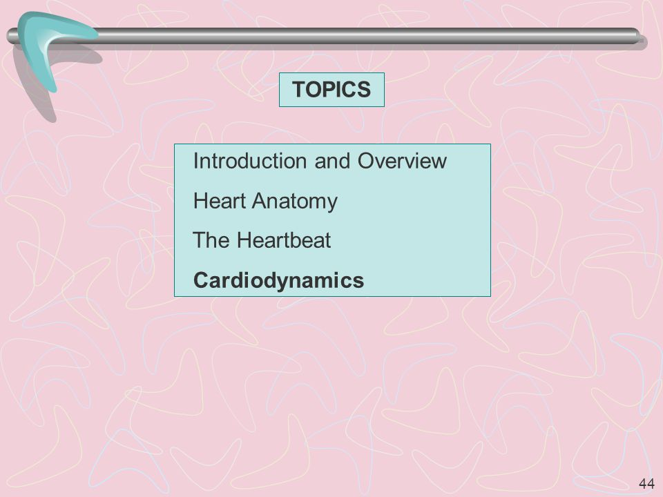 44 TOPICS Introduction and Overview Heart Anatomy The Heartbeat Cardiodynamics