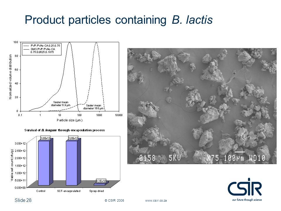 Slide 28 © CSIR 2006 www.csir.co.za Product particles containing B. lactis
