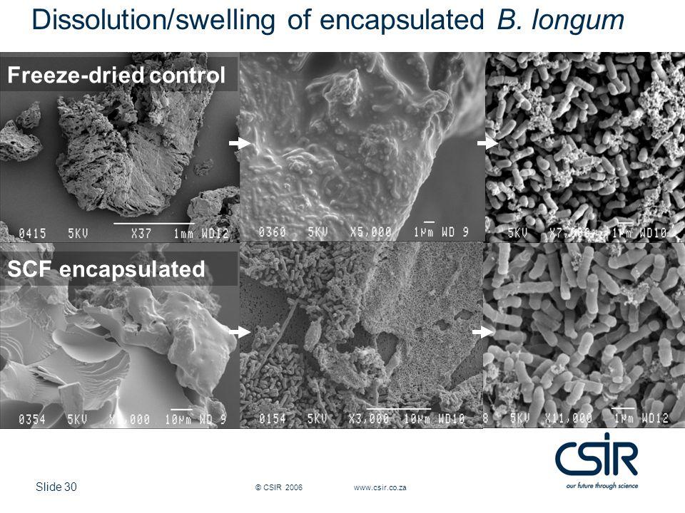 Slide 30 © CSIR 2006 www.csir.co.za Dissolution/swelling of encapsulated B.