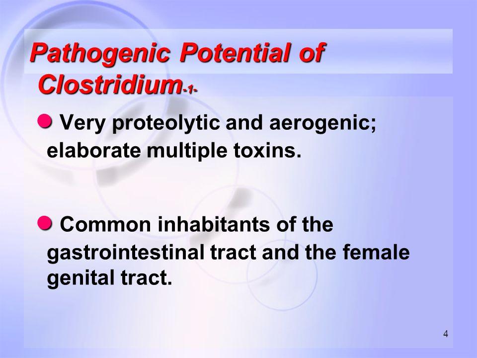 45 ASPOROGENOUS ANAEROBIC GRAM POSITIVE RODS -2- The most commonly encountered genera are: ● Actinomyces, ● Bifidobacterium, ● Eubacterium, ● Propionibacterium, ● Mobiluncus, ● Lactobacillus