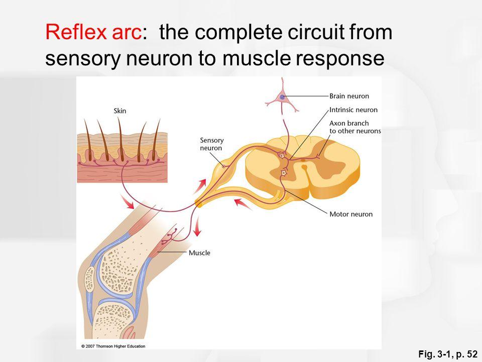 Sherrington deduced three properties of reflexes: 1.Reflexes are slower than conduction along a single axon.
