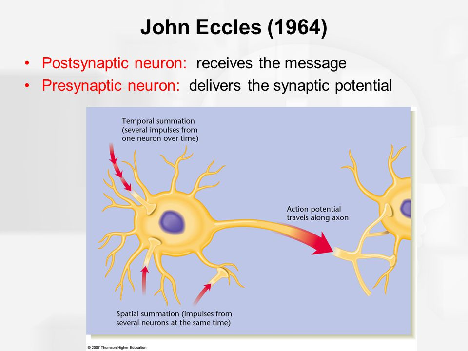 Major sequence of events for neurotransmitters: Reuptake (endocytosis) (H) refers to the presynaptic neuron taking up most of the neurotransmitter molecules intact and reusing them.