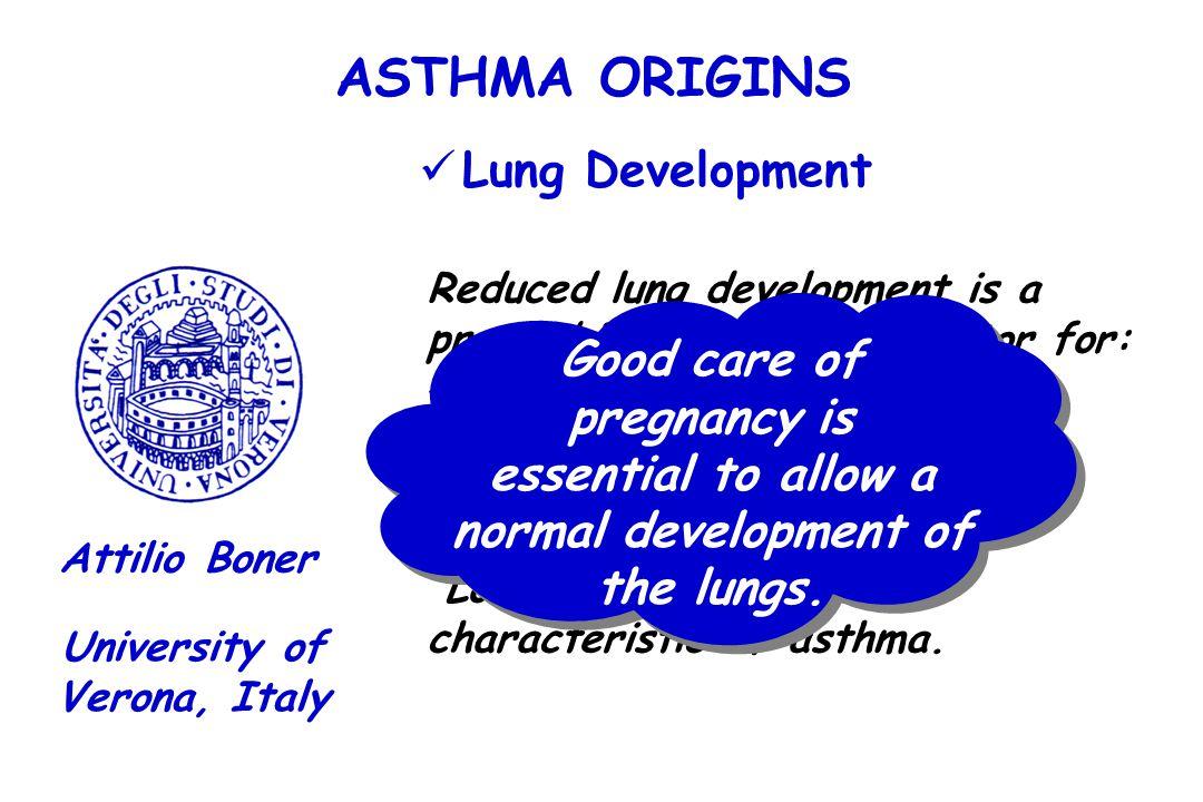 ASTHMA ORIGINS Lung Development University of Verona, Italy Attilio Boner Reduced lung development is a premorbid predisposing factor for: - Transient