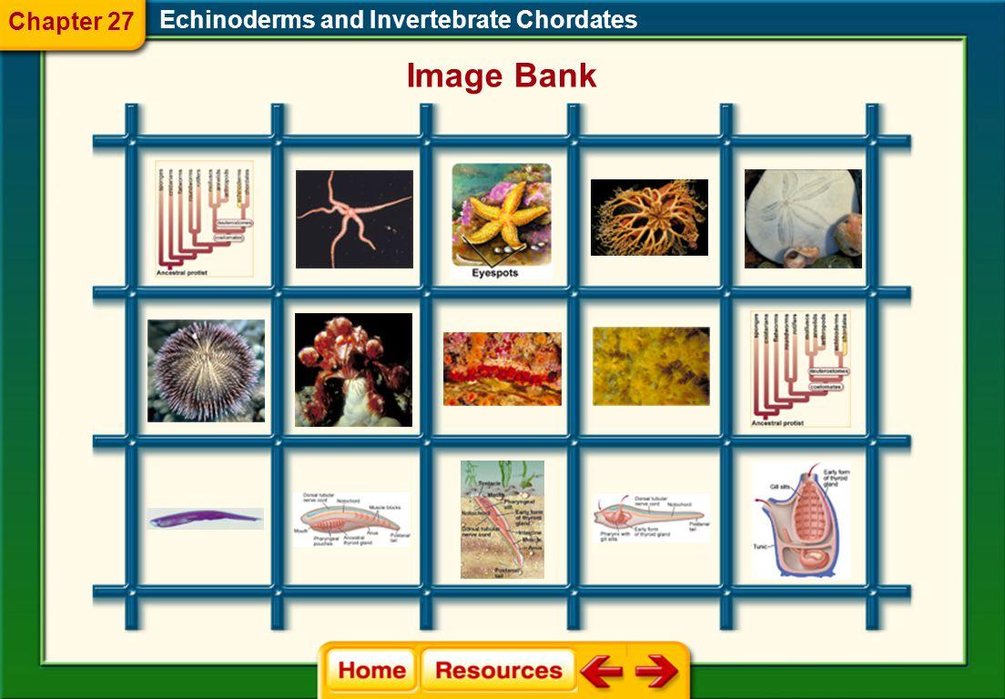 Echinoderms and Invertebrate Chordates Glencoe Biology Transparencies Chapter 27