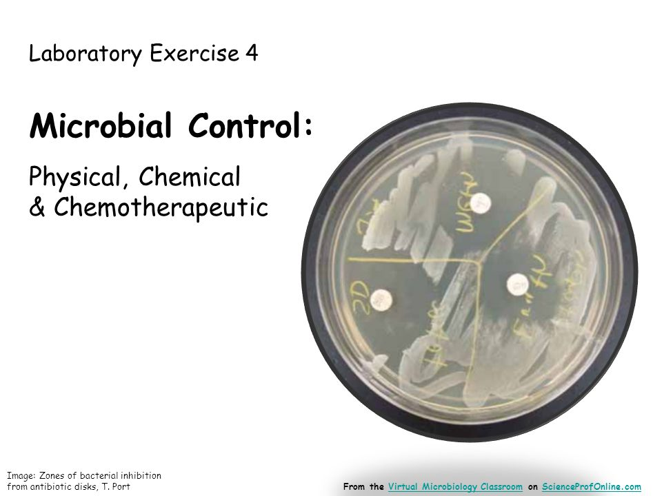 Laboratory Exercise 4 Microbial Control: Physical, Chemical & Chemotherapeutic Image: Zones of bacterial inhibition from antibiotic disks, T.