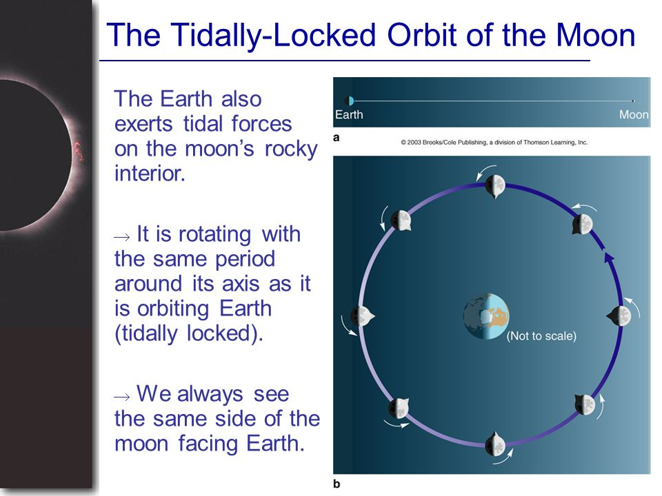 The Tidally-Locked Orbit of the Moon The Earth also exerts tidal forces on the moon's rocky interior.