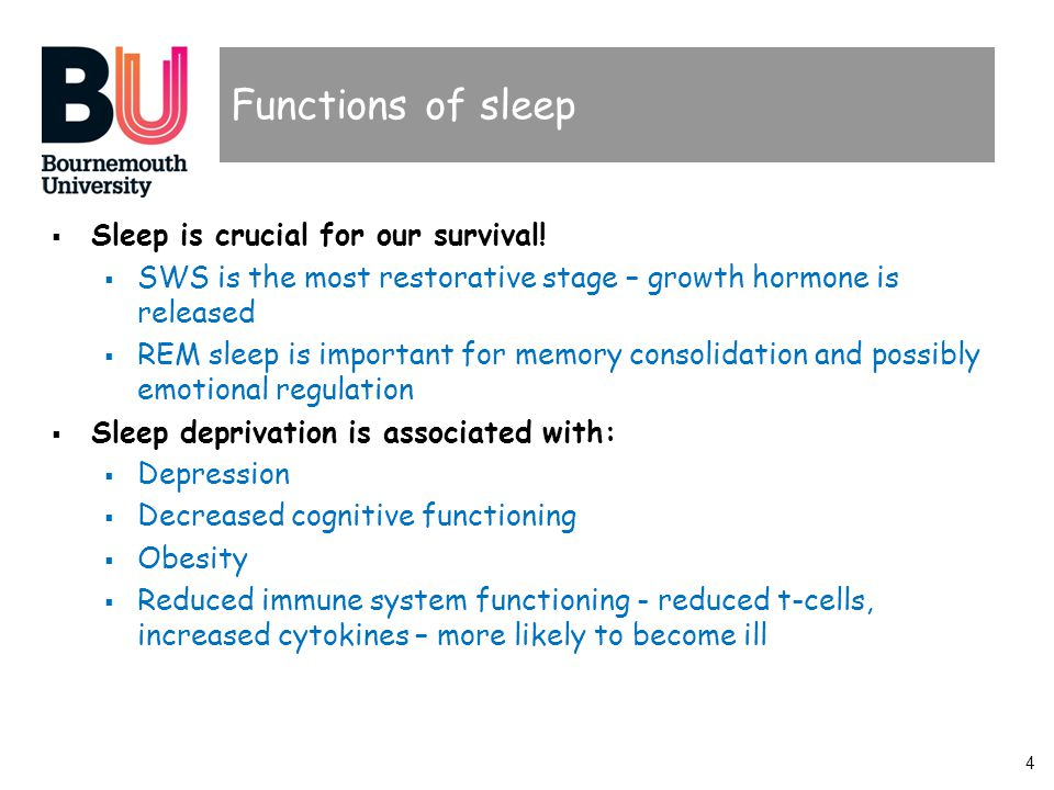 4 Functions of sleep  Sleep is crucial for our survival.