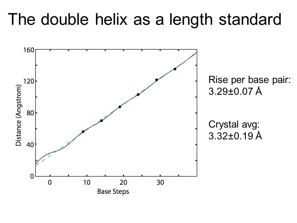 The double helix as a length standard Rise per base pair: 3.29±0.07 Å Crystal avg: 3.32±0.19 Å