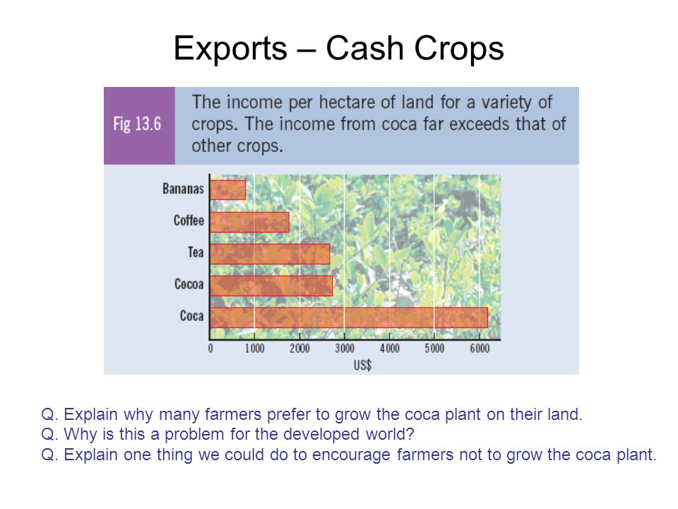 Exports – Cash Crops Q. Explain why many farmers prefer to grow the coca plant on their land. Q. Why is this a problem for the developed world? Q. Exp