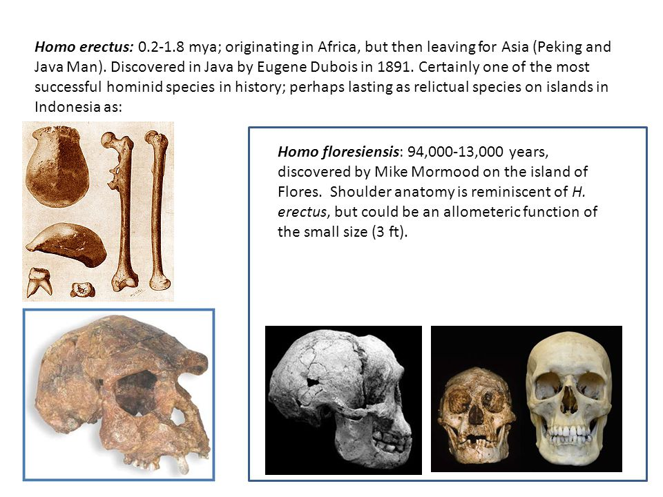 Homo erectus: 0.2-1.8 mya; originating in Africa, but then leaving for Asia (Peking and Java Man).