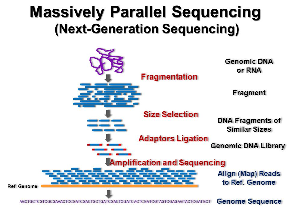 Genomic DNA or RNA Genomic DNA or RNA Fragmentation Fragment Size Selection Adaptors Ligation DNA Fragments of Similar Sizes DNA Fragments of Similar Sizes Genomic DNA Library Amplification and Sequencing Ref.