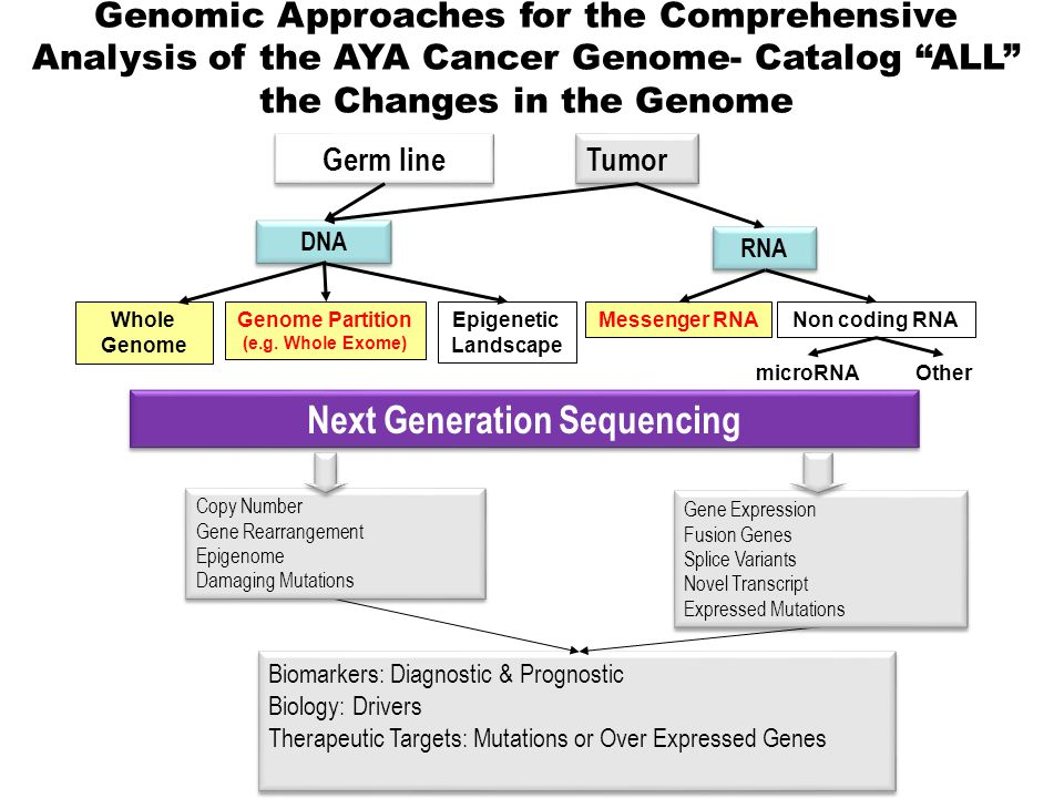 Tumor Biomarkers: Diagnostic & Prognostic Biology: Drivers Therapeutic Targets: Mutations or Over Expressed Genes Biomarkers: Diagnostic & Prognostic Biology: Drivers Therapeutic Targets: Mutations or Over Expressed Genes Copy Number Gene Rearrangement Epigenome Damaging Mutations Copy Number Gene Rearrangement Epigenome Damaging Mutations Gene Expression Fusion Genes Splice Variants Novel Transcript Expressed Mutations Gene Expression Fusion Genes Splice Variants Novel Transcript Expressed Mutations Germ line RNA DNA Messenger RNANon coding RNA microRNAOther Genome Partition (e.g.