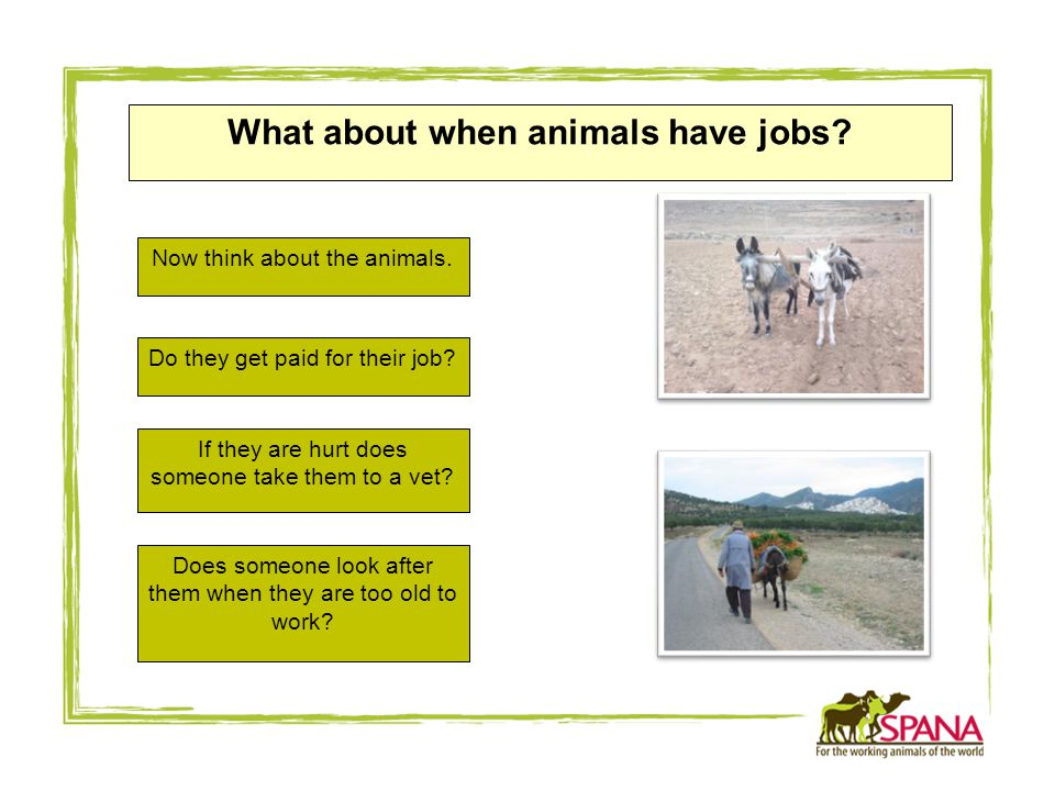 What about when animals have jobs. Now think about the animals.