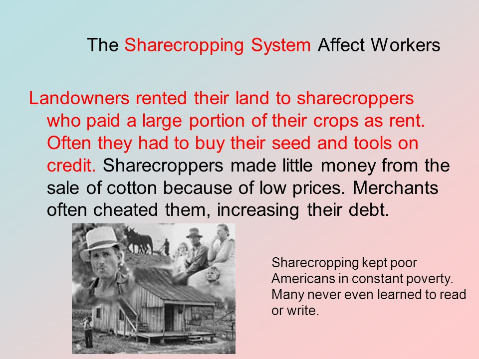 The Sharecropping System Affect Workers Landowners rented their land to sharecroppers who paid a large portion of their crops as rent.