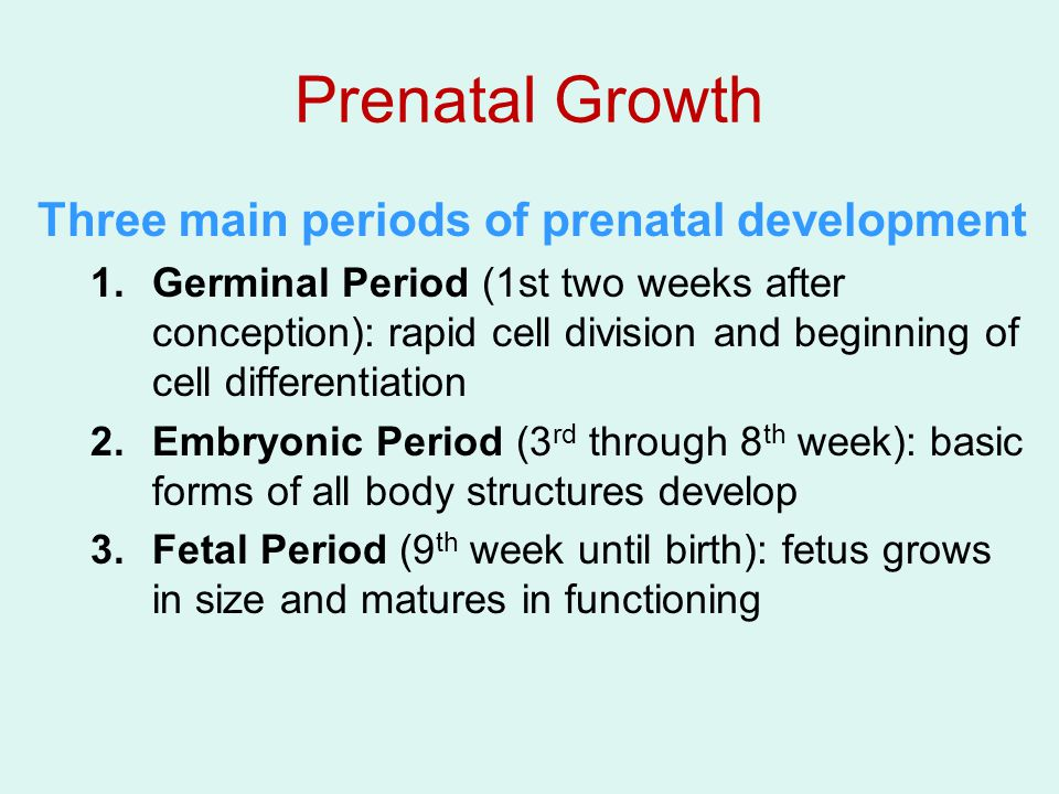The Germinal Period Zygote begins duplication and division within hours of conception Development of the placenta –Organ that surrounds the developing embryo –Sustains life via the umbilical chord Implantation (about 10 days after conception) –Developing organism burrows into the placenta that lines the uterus