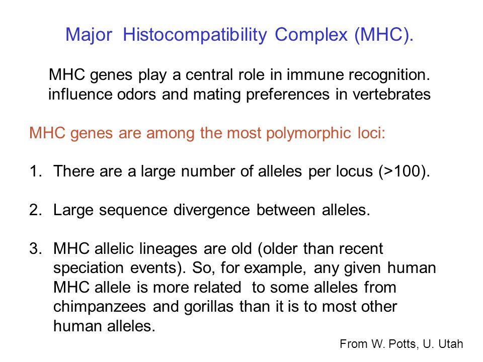 Major Histocompatibility Complex (MHC). MHC genes play a central role in immune recognition.