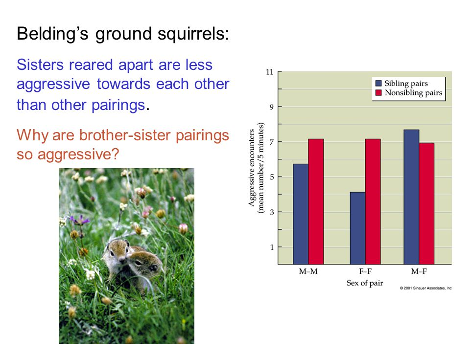 Belding's ground squirrels: Sisters reared apart are less aggressive towards each other than other pairings.