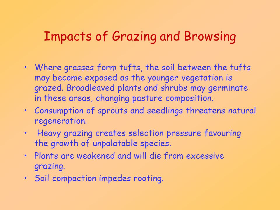 Impacts of Grazing and Browsing Where grasses form tufts, the soil between the tufts may become exposed as the younger vegetation is grazed. Broadleav