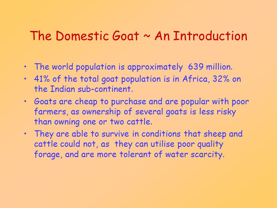 Physical Characteristics The goat is a small ruminant, weight varies between breeds and between bucks and does.