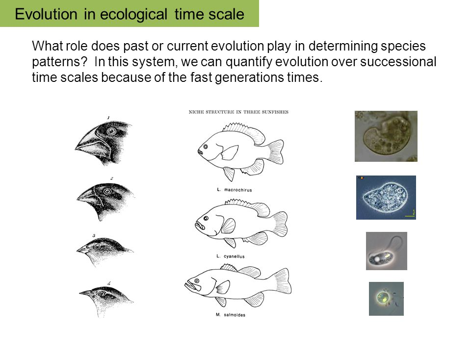 Evolution in ecological time scale What role does past or current evolution play in determining species patterns.