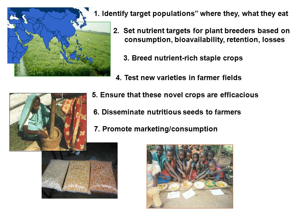 """1. Identify target populations"""" where they, what they eat 3. Breed nutrient-rich staple crops 4. Test new varieties in farmer fields 5. Ensure that th"""