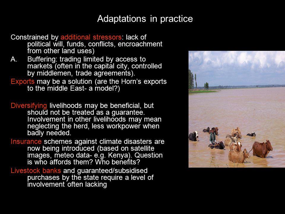 Adaptations in practice Constrained by additional stressors: lack of political will, funds, conflicts, encroachment from other land uses) A.Buffering: trading limited by access to markets (often in the capital city, controlled by middlemen, trade agreements).