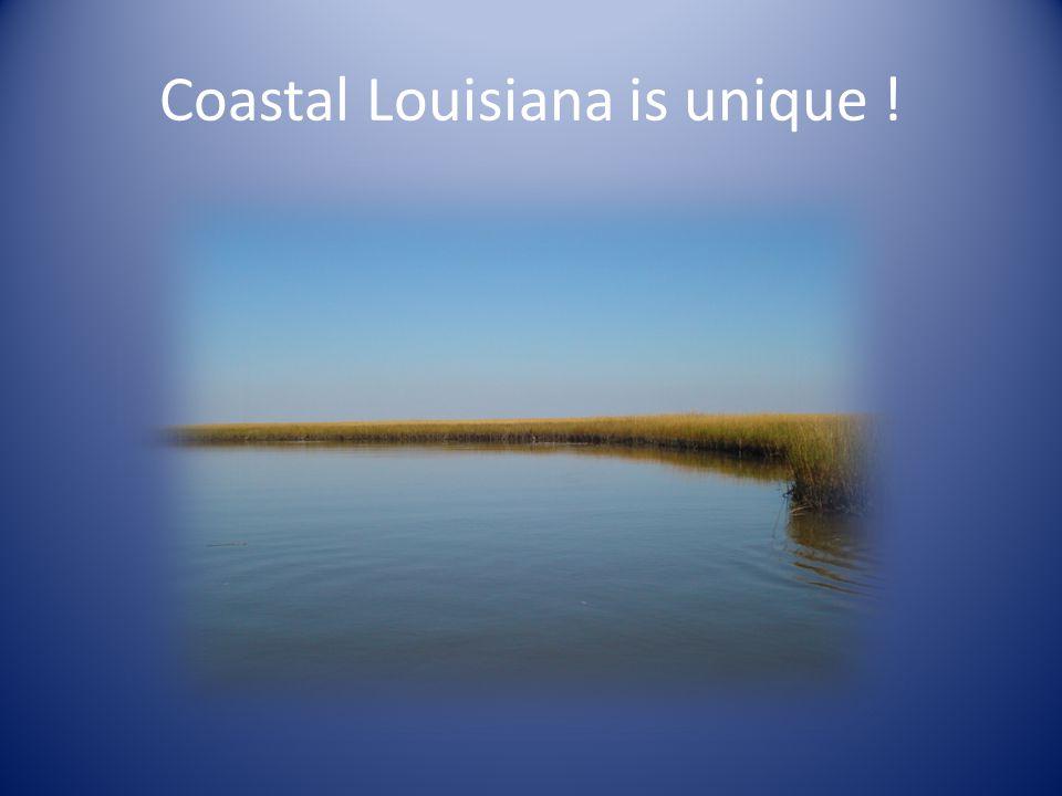 Coastal Louisiana is unique !