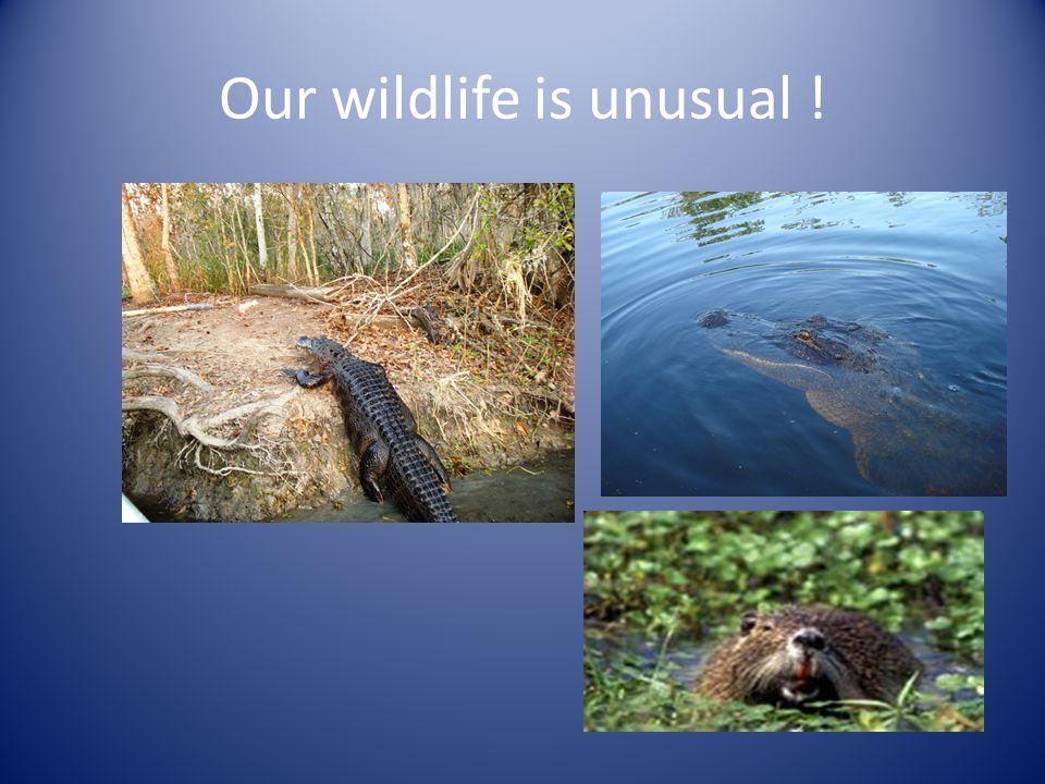 Our wildlife is unusual !