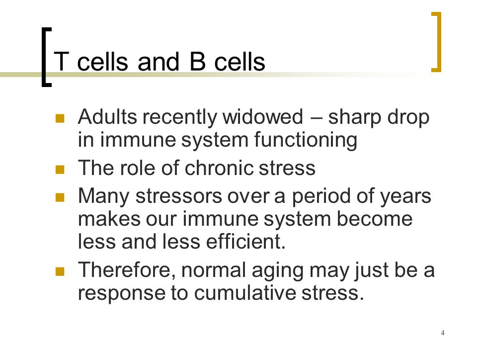 4 T cells and B cells Adults recently widowed – sharp drop in immune system functioning The role of chronic stress Many stressors over a period of years makes our immune system become less and less efficient.