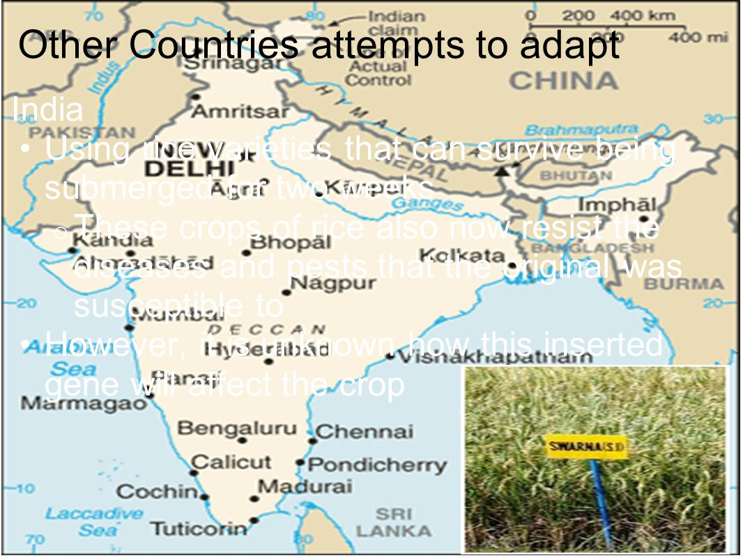 Other Countries attempts to adapt India Using rice varieties that can survive being submerged for two weeks o These crops of rice also now resist the diseases and pests that the original was susceptible to However, it is unknown how this inserted gene will affect the crop