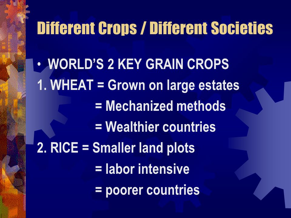 Different Crops / Different Societies WORLD'S 2 KEY GRAIN CROPS 1.
