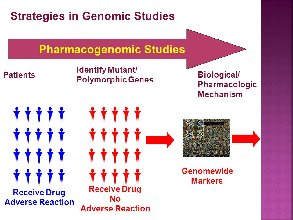 Pharmacogenomic Studies Patients Biological/ Pharmacologic Mechanism Strategies in Genomic Studies Identify Mutant/ Polymorphic Genes Receive Drug Adverse Reaction Receive Drug No Adverse Reaction Genomewide Markers
