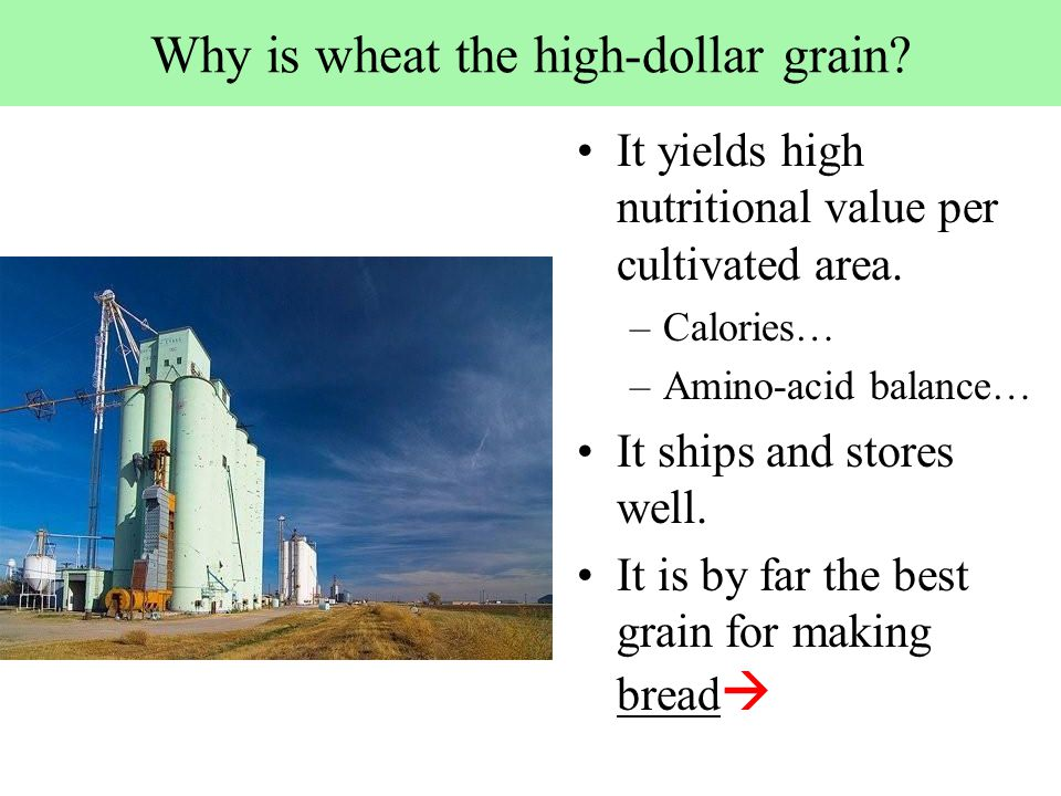 Why is wheat the high-dollar grain. It yields high nutritional value per cultivated area.