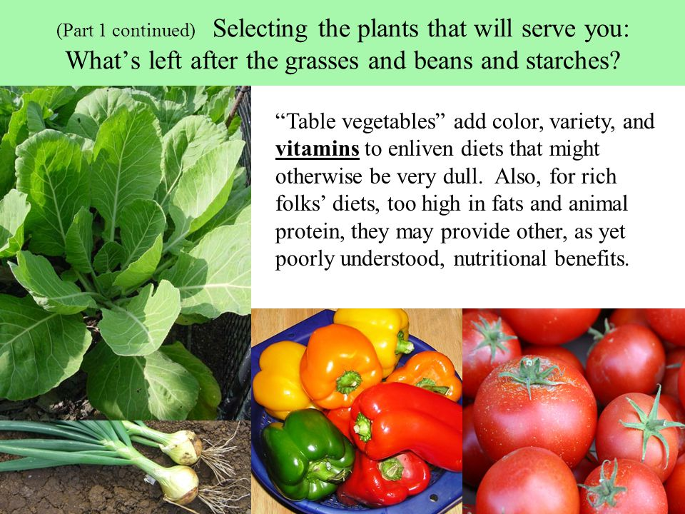 (Part 1 continued) Selecting the plants that will serve you: What's left after the grasses and beans and starches.